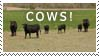 Cows Stamp by sd-stock
