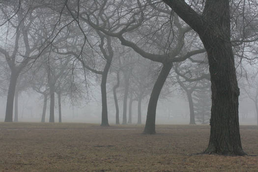 Foggy Forest 38