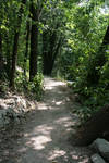 Forest Path 5