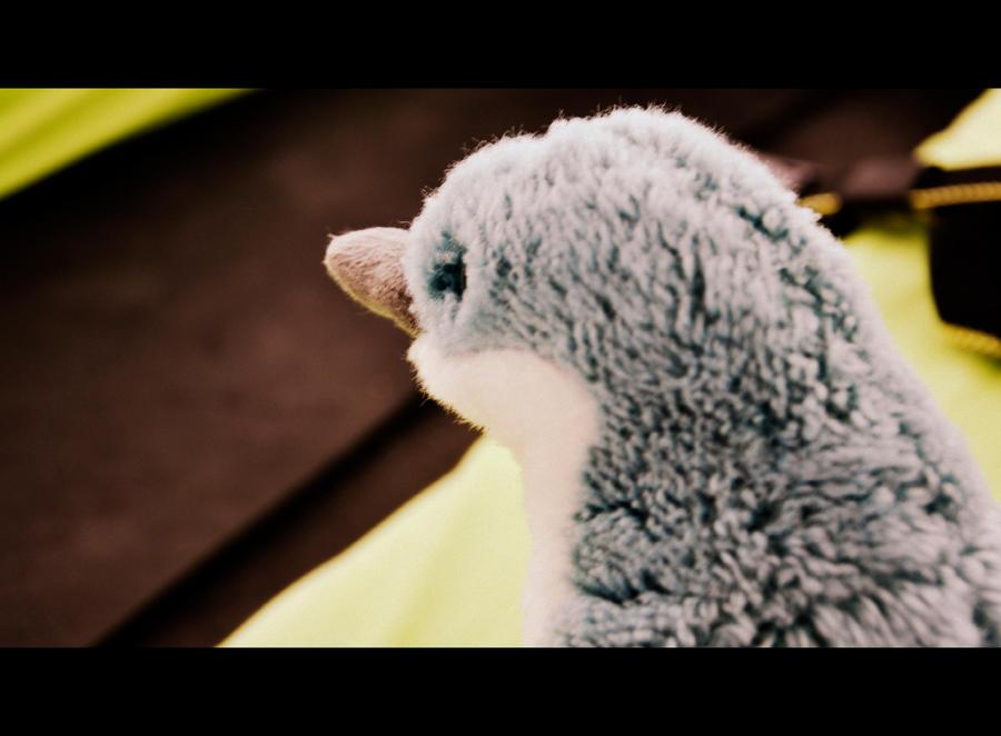 Penguin Photograph by vivovivo