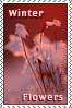 Winter Flowers Stamp Prize