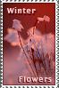 Winter Flowers Stamp Prize by xgnyc