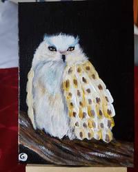 Postcard 4: Fluffy Barn Owl by GiovyLoCa
