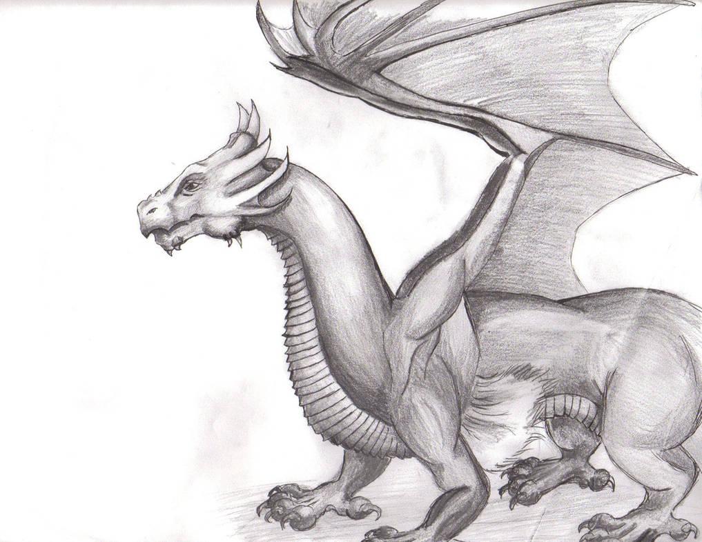 Dragon Sketch by wisecracker42