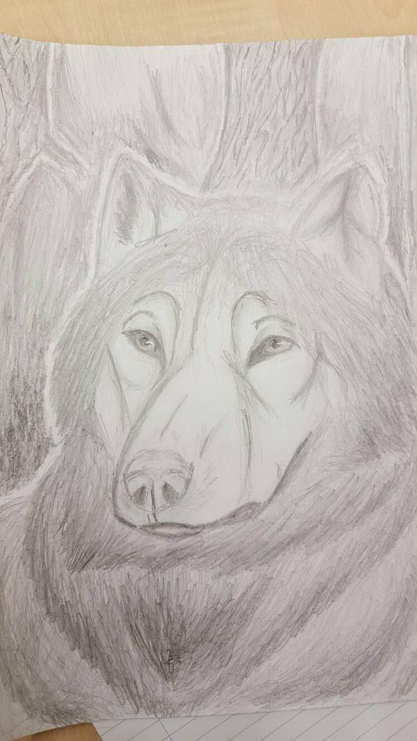 My First Wolf  by Orangeak13