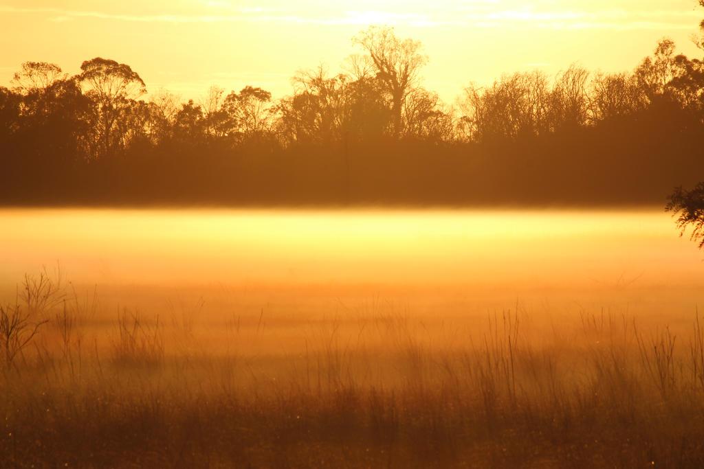 Misty eye 2 by A711