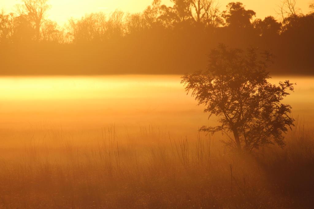 Misty eye tree by A711
