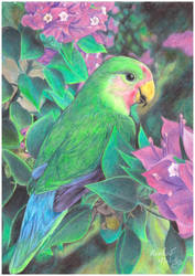 Parrot by RainbowNatalia