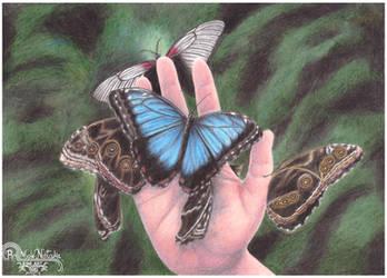 Butterflies by RainbowNatalia