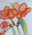 Freesia on Hahnemuehle paper by Sumbae7