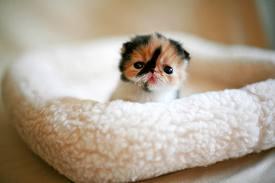 cute when small by tfakairi