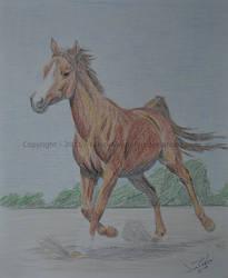 Farah by lazybrownhorse