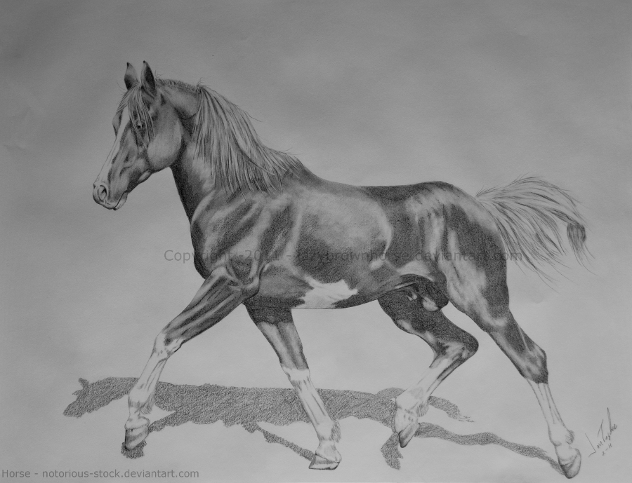 Arabian Stallion by lazybrownhorse