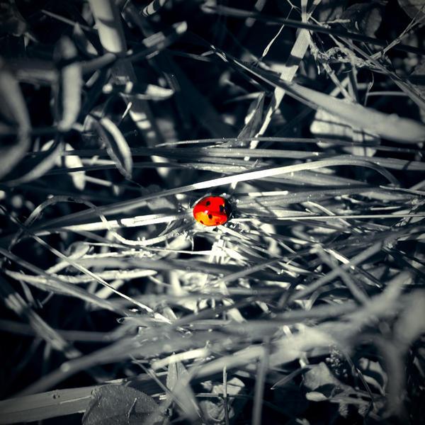 TheLadybird by ToWelcomeTheFade