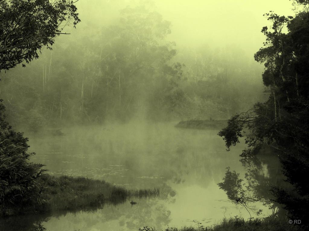 mystery morning fog by Whismermill