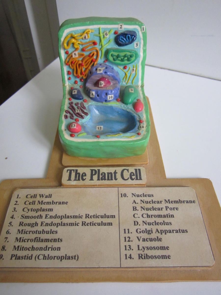 3d Plant Cell Models Plant cell with key by