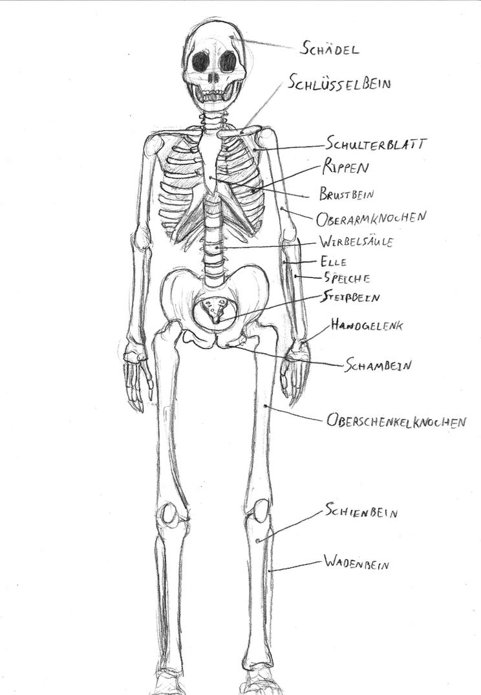 Human skeleton sketch by IronRebel