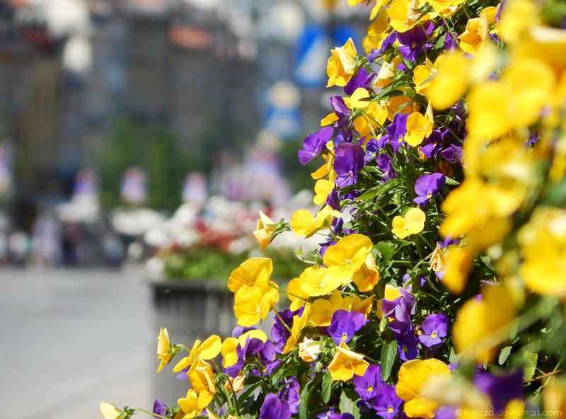 Flowers in the city by rokicza