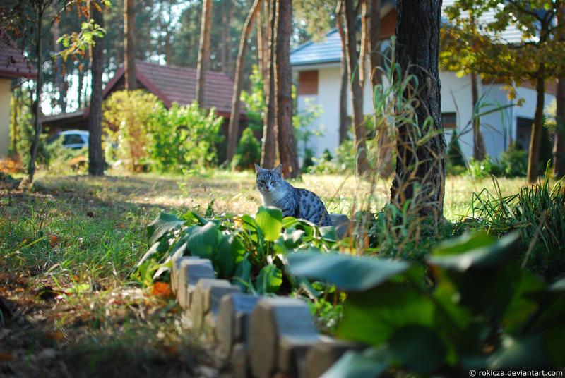 Grey cat in the garden by rokicza
