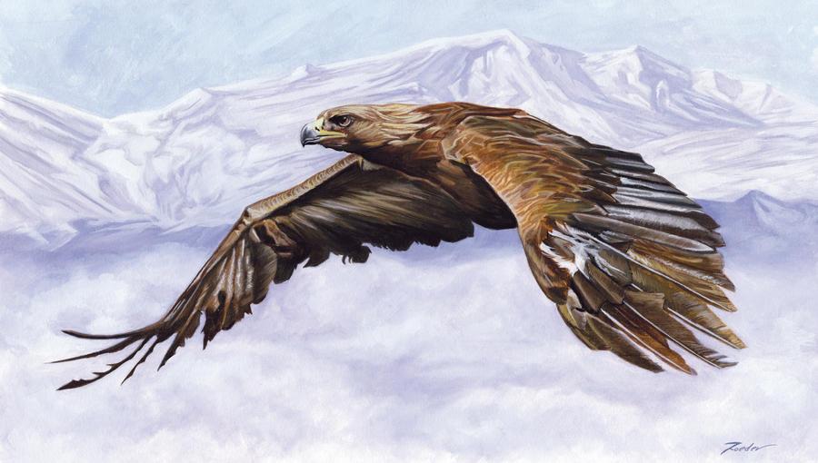 Bald Eagle by diogonen on DeviantArt