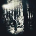 `Forest darkness`