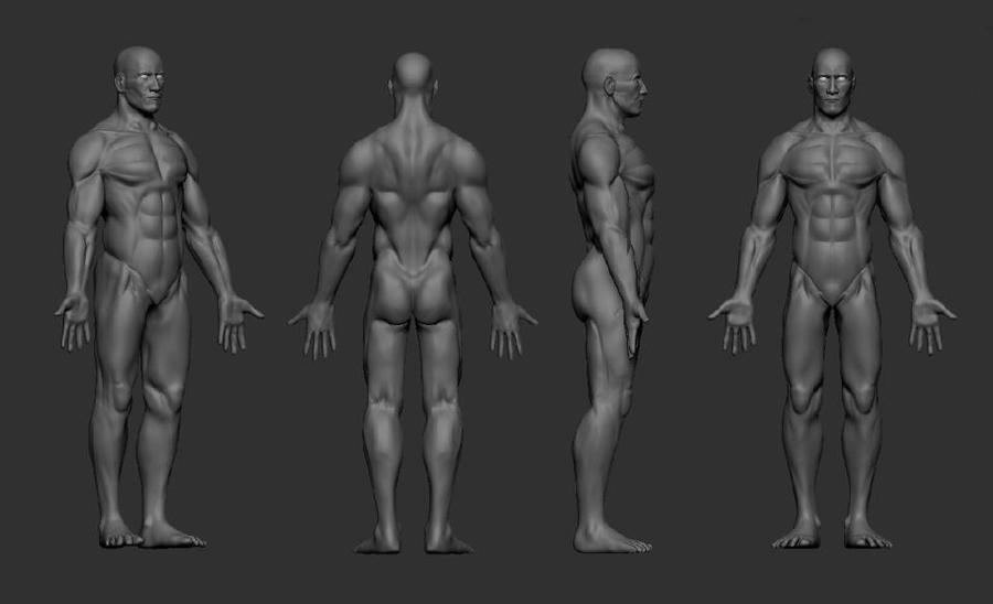 human male anatomy study by hobbles808 on deviantart, Human Body