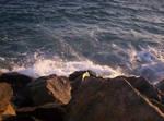 ...Ocean And Rocks...