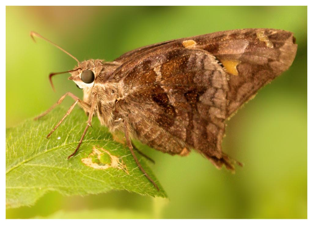 Macro Butterfly by Loreana10