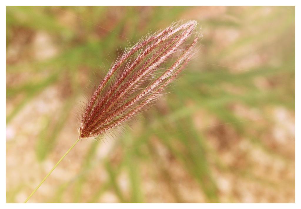Herb by Loreana10