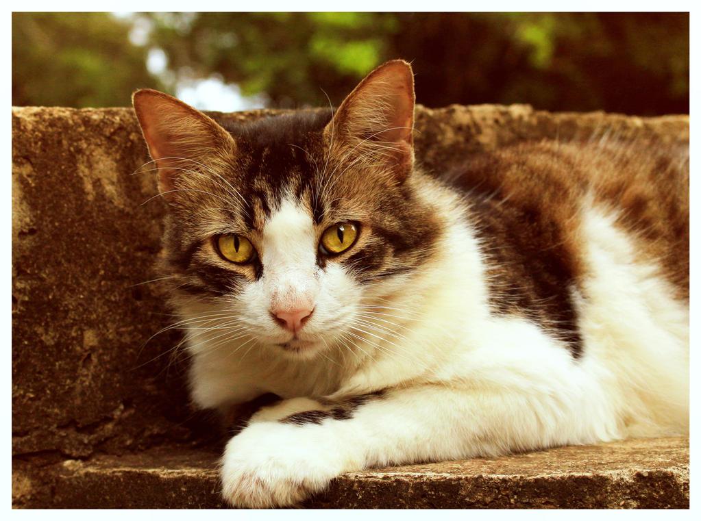 My beautiful cat by Loreana10