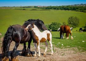 Brighton Horses by matpreece