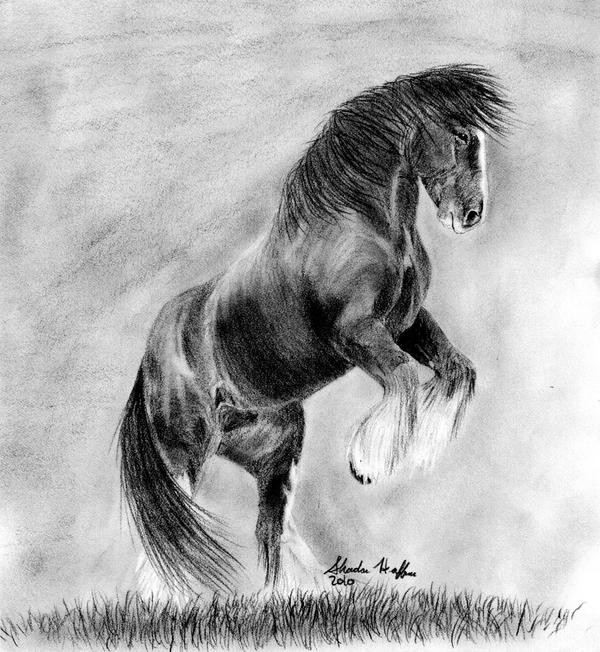 how to draw a wild horse