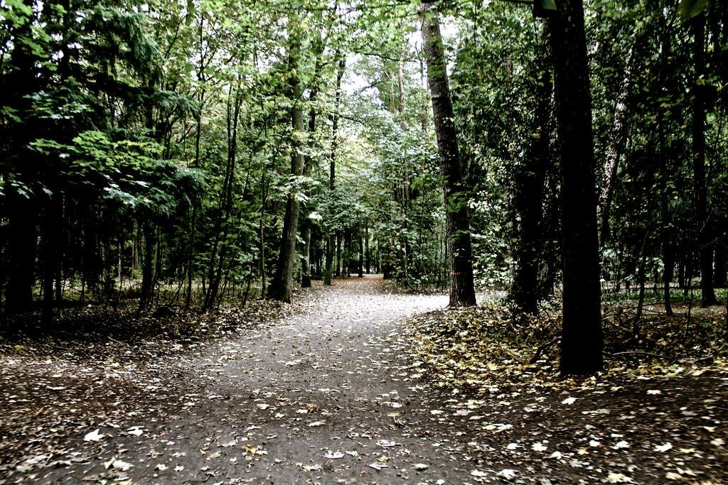 Herbstwege by HexeMistelzweig