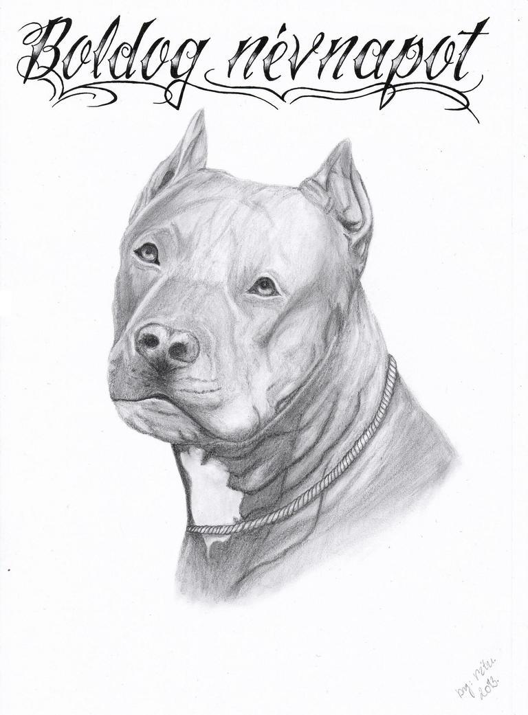 pitbull happy nameday gabo u0027s by ritubimbi on deviantart