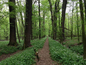 A path. Path that no longer exists