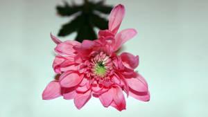 Flower Shot 3
