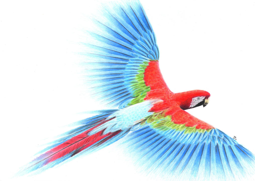 Parrot in coloured pencils by maaal art on deviantart for Cool drawing sites