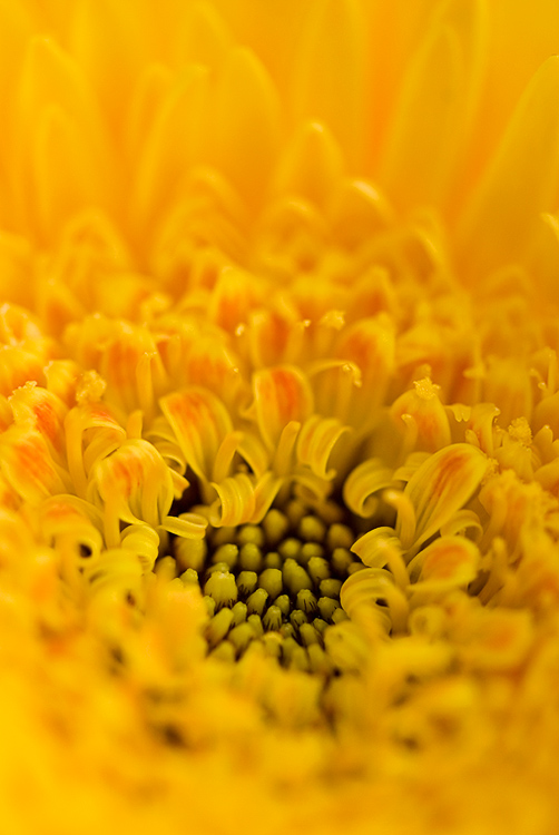 Yellow. by meemo