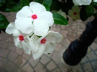 Cobblestone Flowers