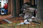 Predator and the prey