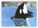 Killer Whale by clarinetplayer