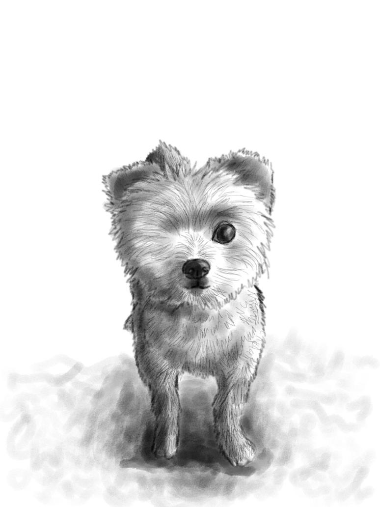 Puppy-RedditGetsDrawn by clarinetplayer