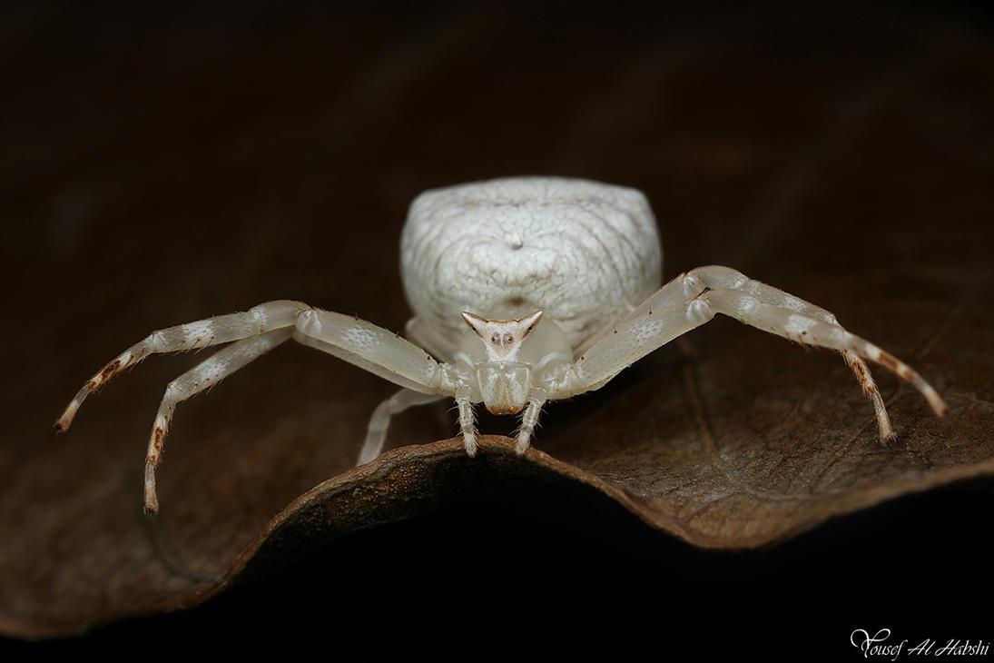 http://alhabshi.deviantart.com/art/Flower-Crab-Spider-269835072