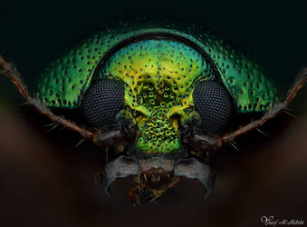 Metallic Leaf Beetle by AlHabshi
