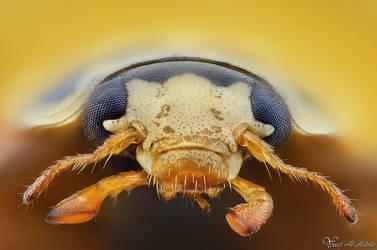 Ladybug/Ladybird by AlHabshi