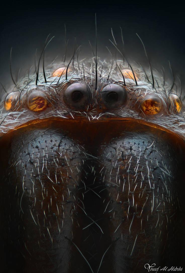 Spider by AlHabshi