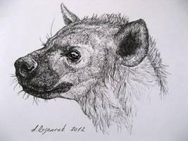 hyena by naitiron