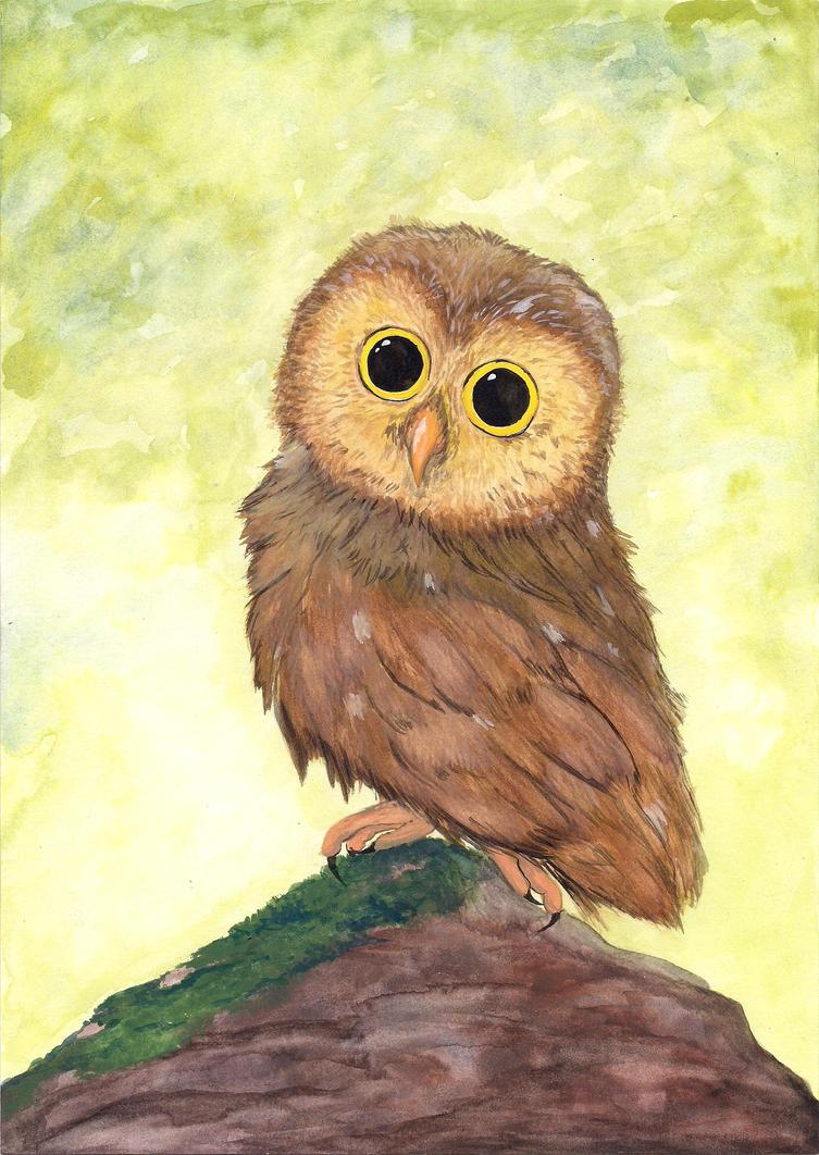 Little Owl by yoru27