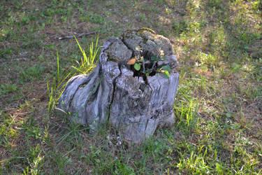 Tree Stump by xappletinix