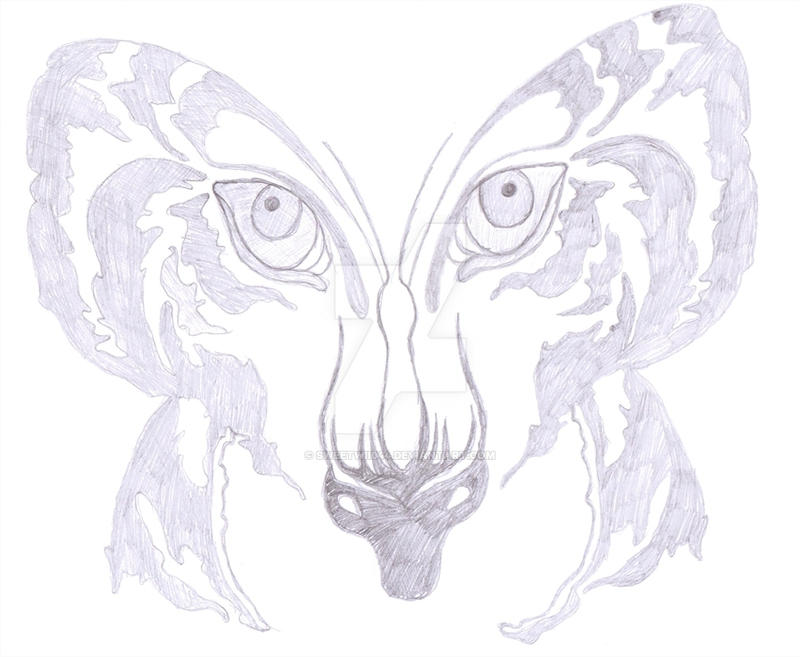 Tiger butterfly drawing